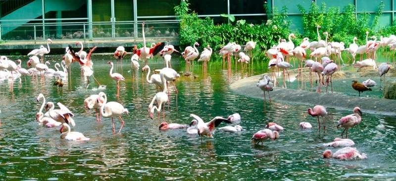 jurong-bird-park- flamingo
