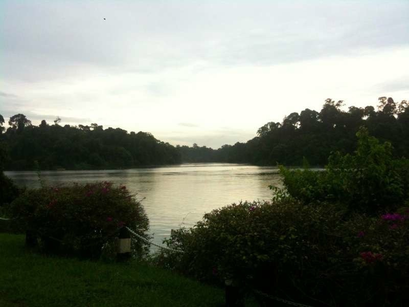 macritchie-reservoir-4