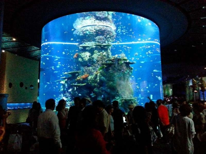 sea-aquarium-2