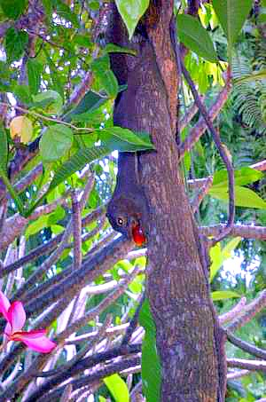 singapore-botanic-gardens-squirrel