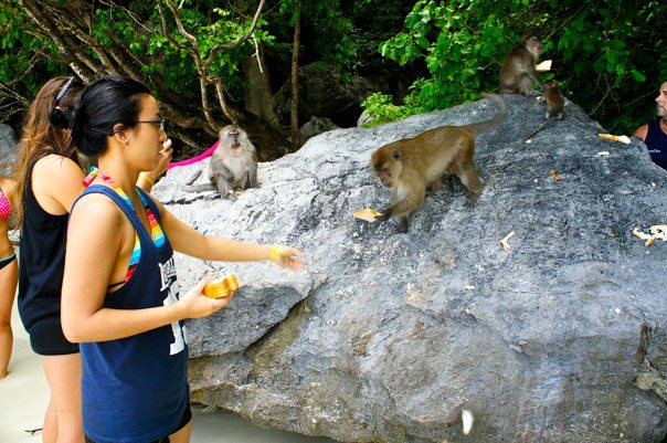 phuket-feeding-monkeys